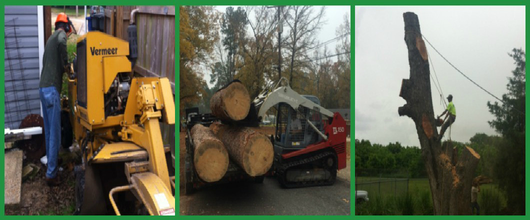 Are you looking for a local Shreveport, LA tree service company?