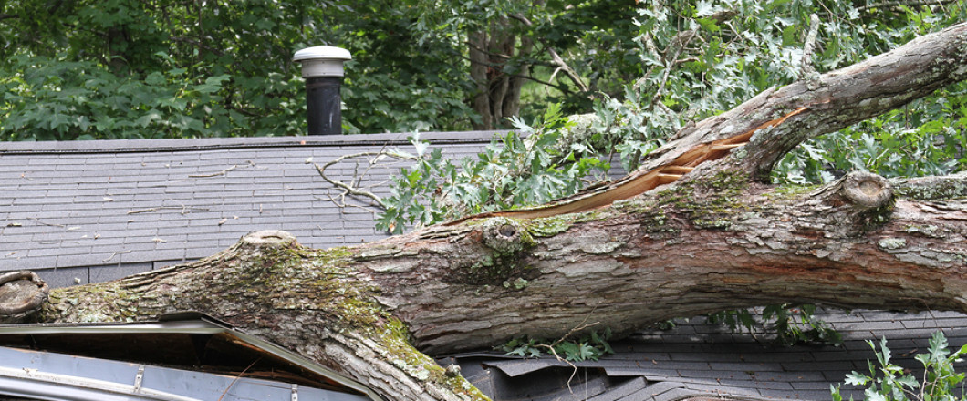 Have you been impacted by the recent storms? Arbor Management Services is here to help!